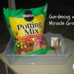 Planting Watermelons with Miracle-Gro